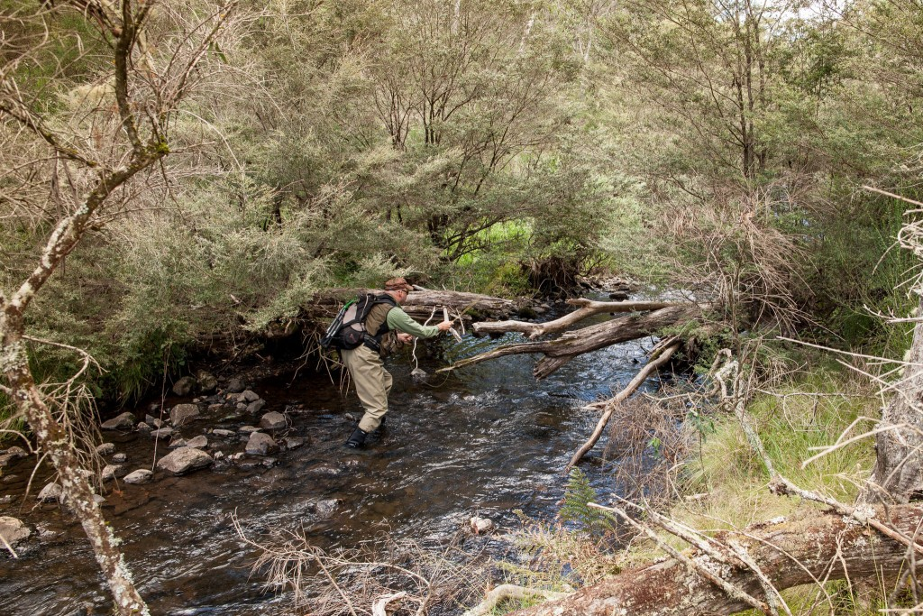 Fly fishing the Manning river.