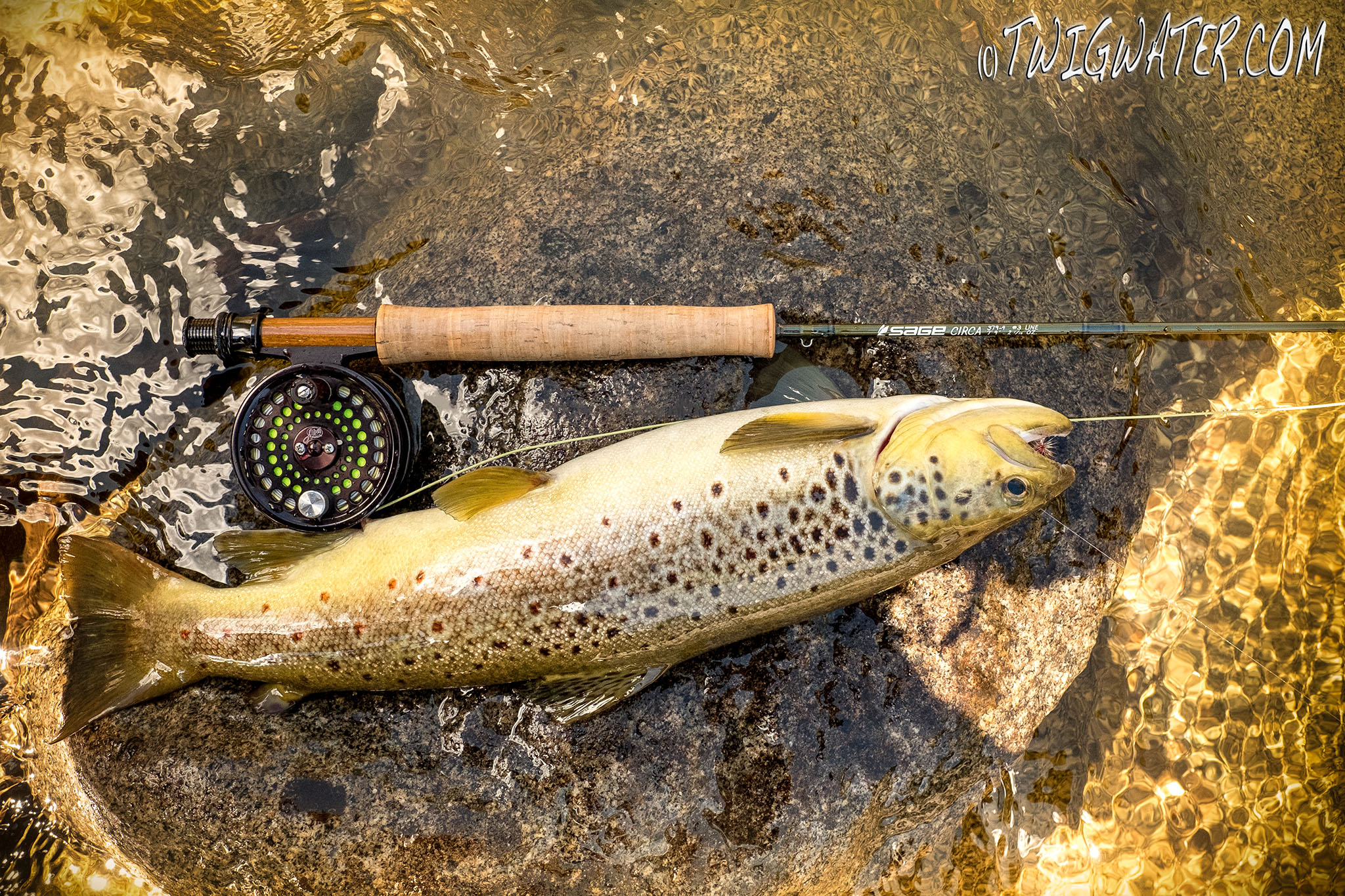 Sage Circa 3 weight fly rod review on twigwater