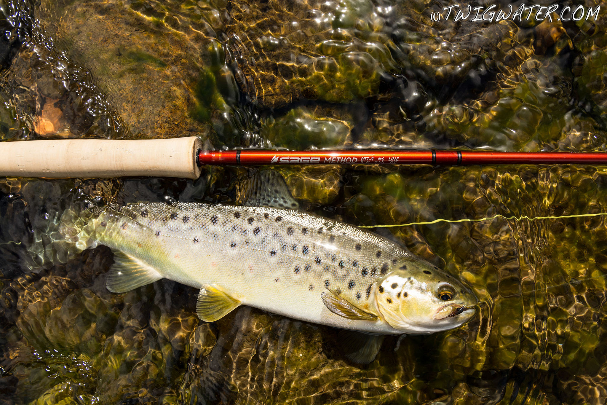 Sage Method #6 fly rod review on Twigwater