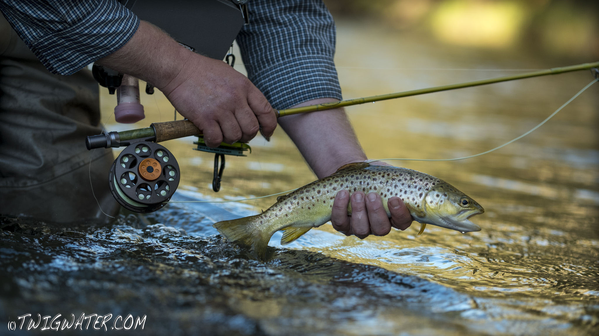 Vision Onki and brown trout on Twigwater