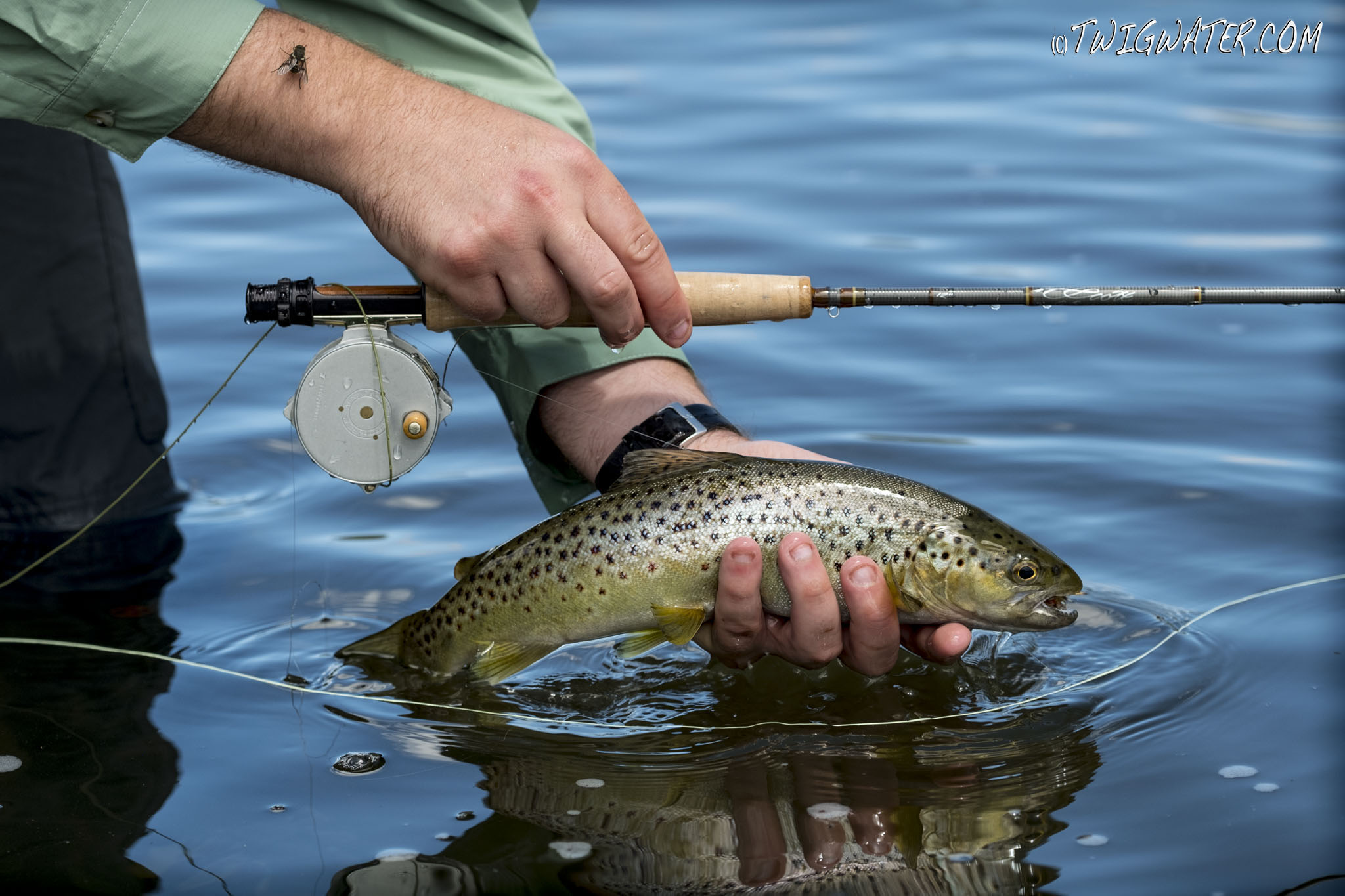 Scott, G, fly, rod, review, twigwater, trout