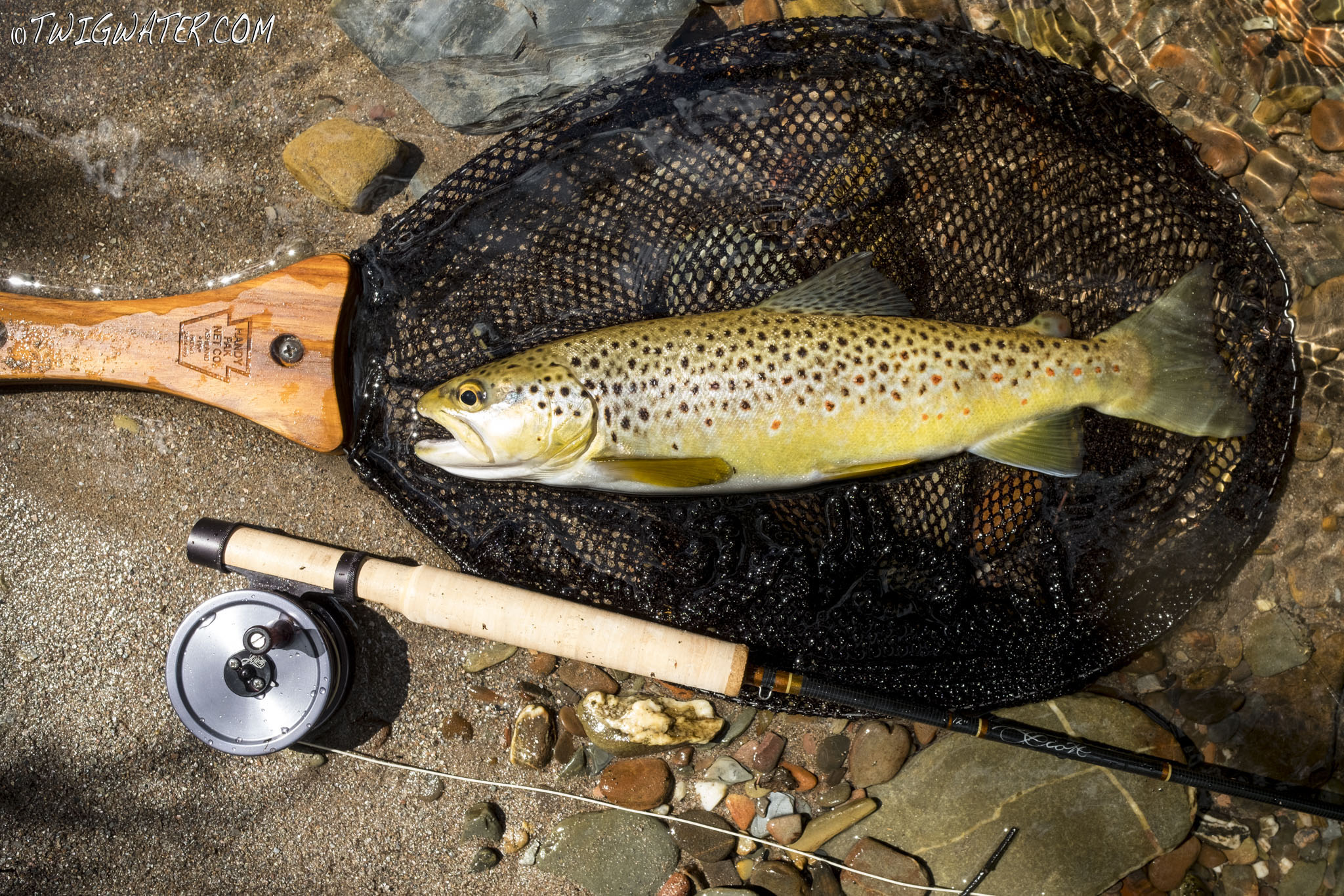 Scott, 2, weight, flared, review, trout, twigwater