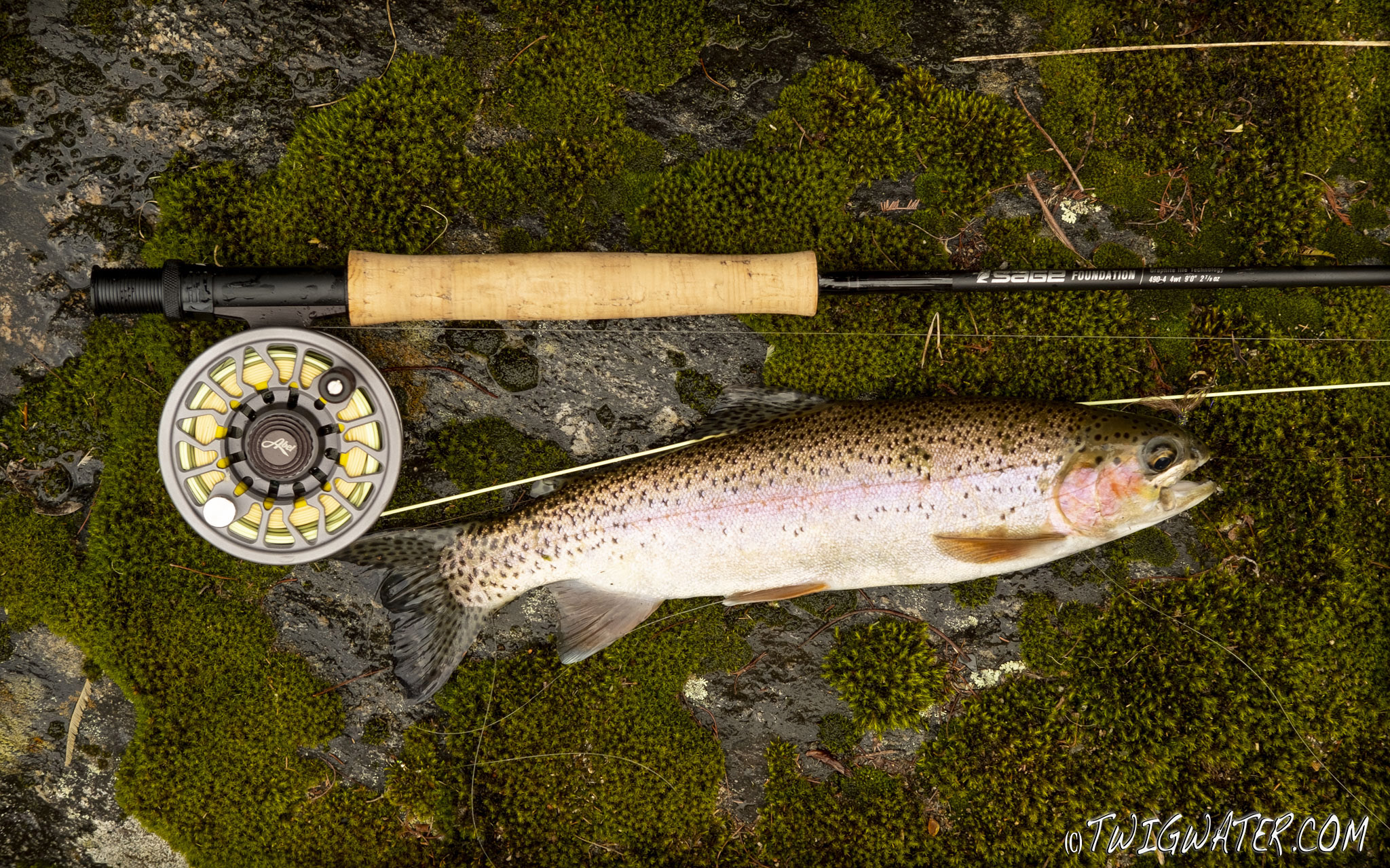 Sage Fly rod review on twigwater.com