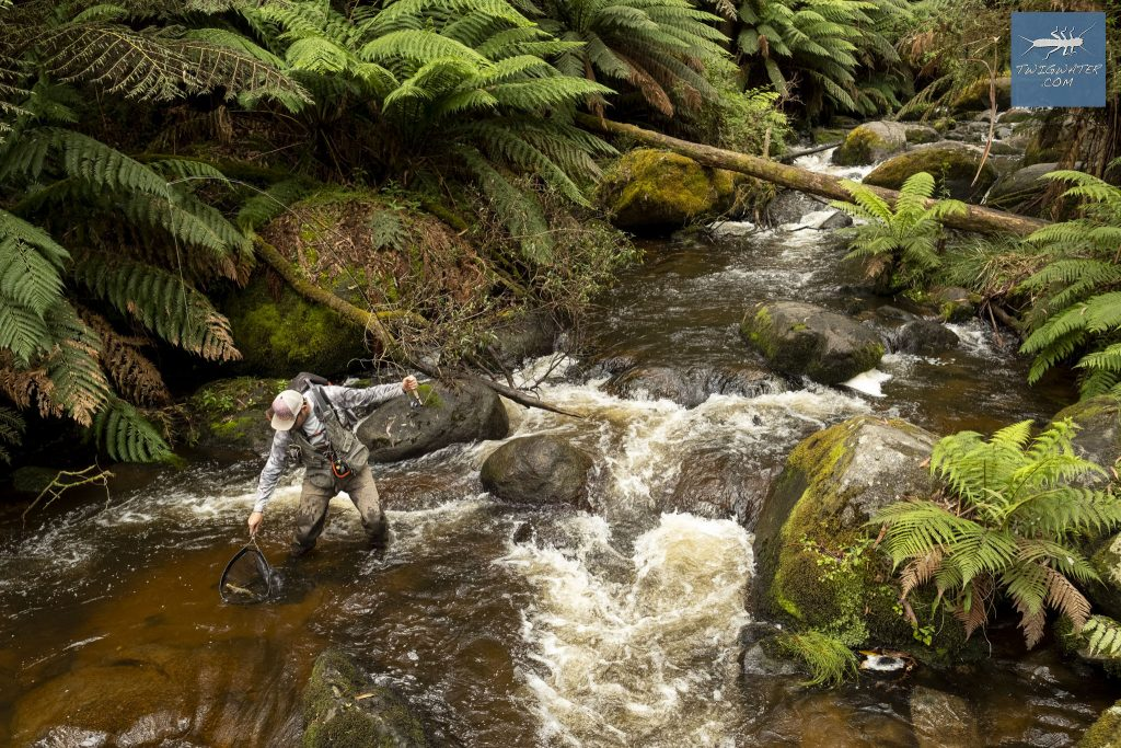 Baw Baw Victoria trout fishing on fly twigwater