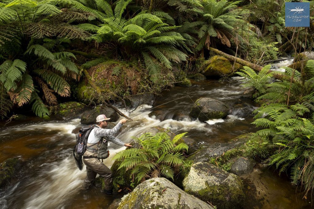 Baw Baw Victoria trout fishing on fly twigwater fly fishing