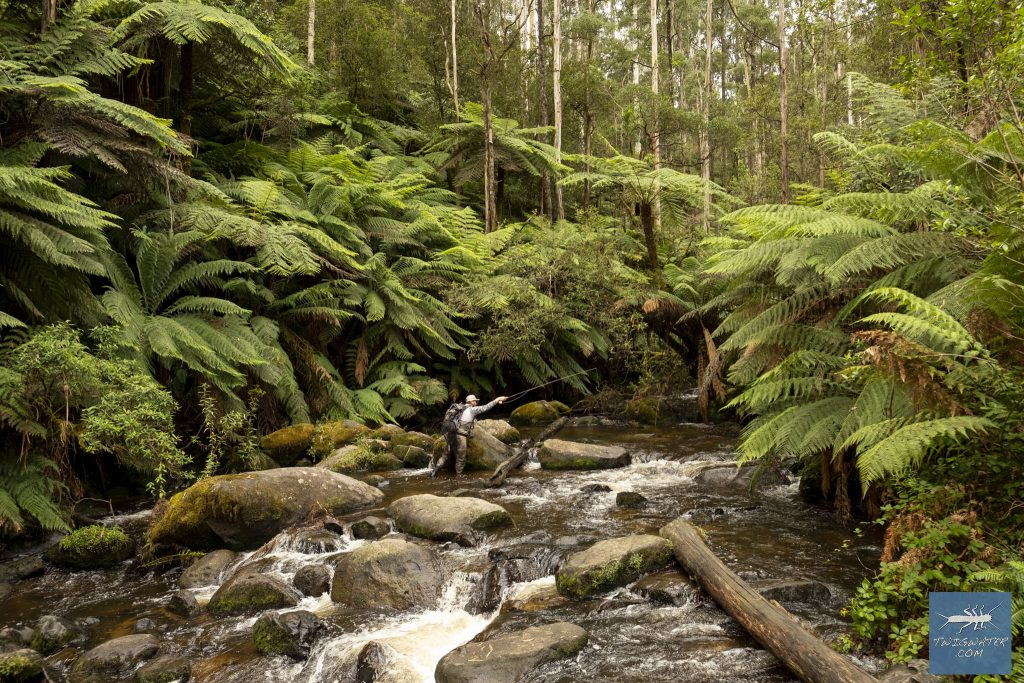 Baw Baw Victoria fly fishing Toorongo River twigwater.com