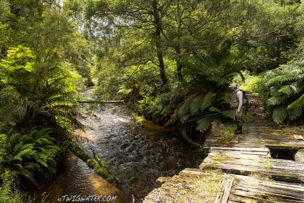West Branch of the Tanjil River, Baw Baw Victoria, Australia, fly fishing