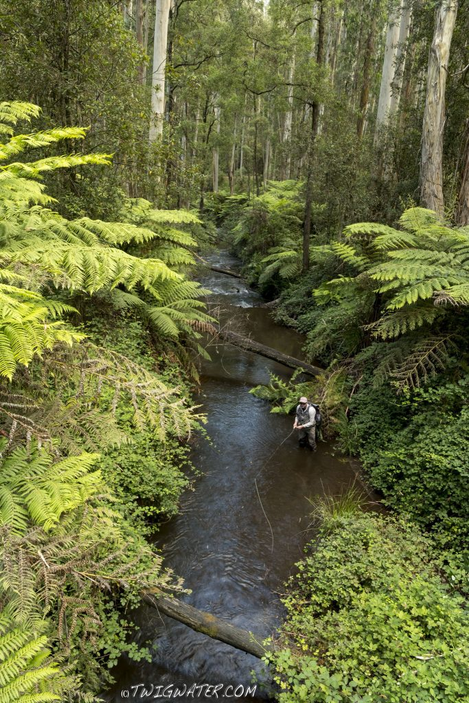 Icy Creek Baw Baw Victoria fly fishing twigwater.com