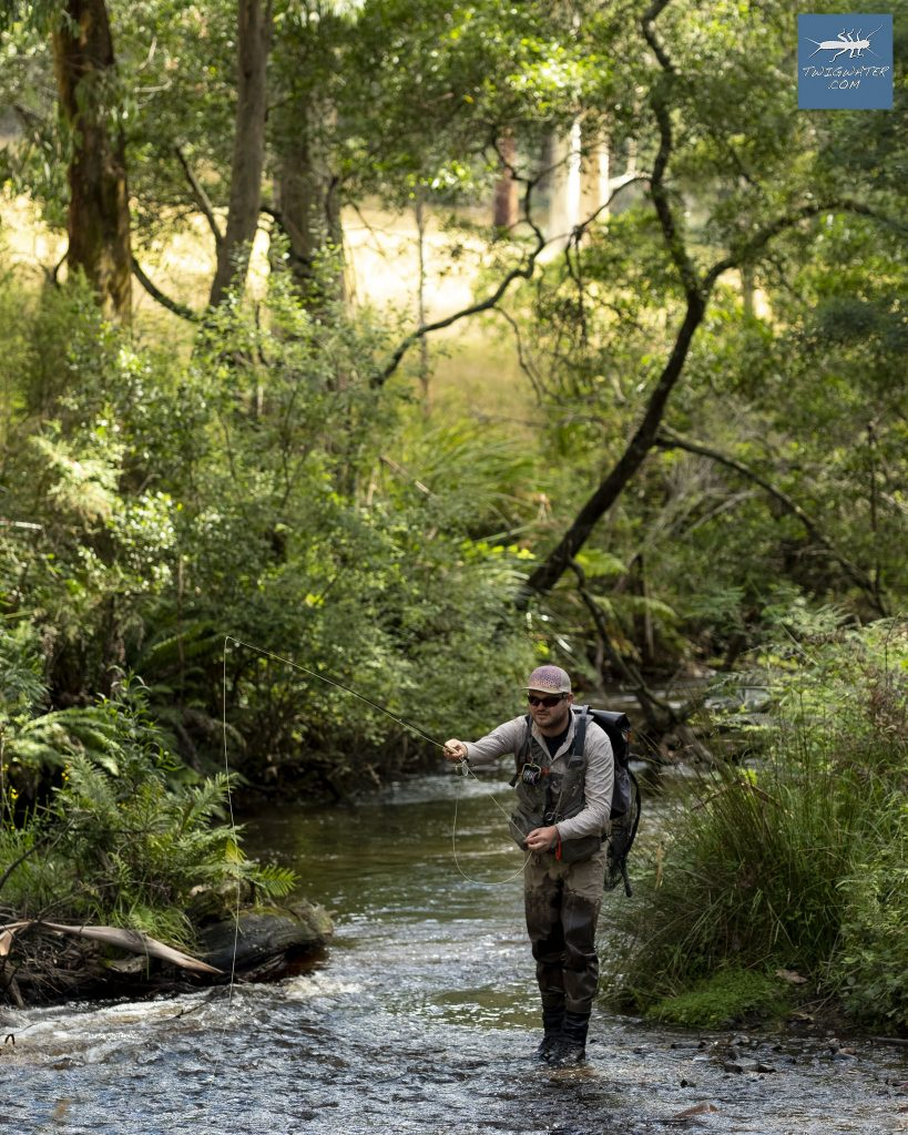 Toorongo River. Victoria Australia trout fly fishing twigwater.com