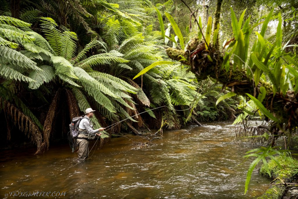 Tanjil River Baw Baw Victoria trout fly fishing small stream twigwater